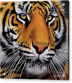 November Tiger Acrylic Print