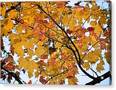November Twilight Acrylic Print by JAMART Photography