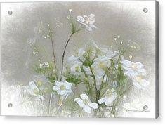 Nuage Blanc Acrylic Print