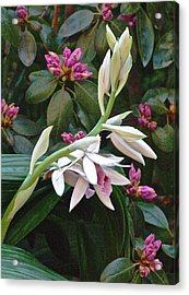 Nun Orchid Acrylic Print by Janis Nussbaum Senungetuk