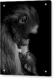 Nurture Acrylic Print by Paul Neville