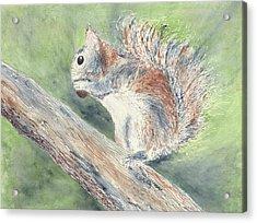 Nut Job Acrylic Print