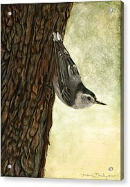 Nuthatch Acrobat Acrylic Print by Susan Donley