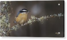 Nuts About Nuthatches Acrylic Print