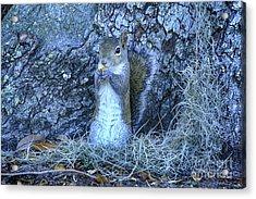 Acrylic Print featuring the photograph Nuts Anyone by Deborah Benoit
