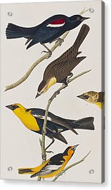 Nuttall's Starling Yellow-headed Troopial Bullock's Oriole Acrylic Print by John James Audubon