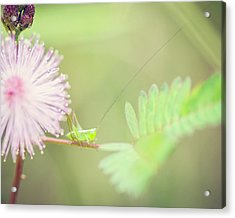 Acrylic Print featuring the photograph Nymph by Heather Applegate