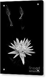 Nymphaea Foxfire Acrylic Print by Tim Gainey