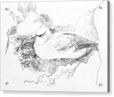 New Zealand White-capped Mollymawk Acrylic Print