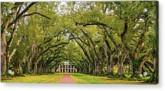 Oak Alley 4 Acrylic Print
