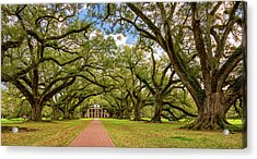 Oak Alley 5 Acrylic Print