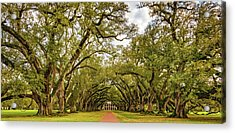 Oak Alley 6 Acrylic Print