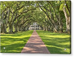 Oak Alley Plantation Acrylic Print
