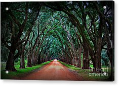 Oak Alley Road Acrylic Print by Perry Webster