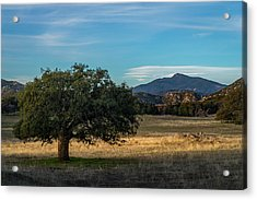 Oak And Cuyamaca Acrylic Print