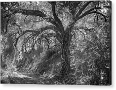 Acrylic Print featuring the photograph Oak And Trail by Alexander Kunz