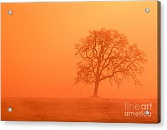 Oak At Sunrise Acrylic Print by Greg Vaughn - Printscapes