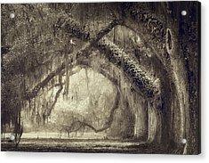 Oak Avenue Acrylic Print by Magda Bognar