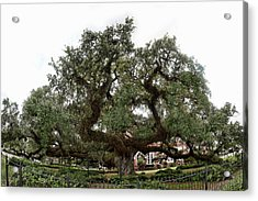 Acrylic Print featuring the photograph Oak by Cecil Fuselier