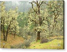Oak Forest Acrylic Print by Frank Townsley