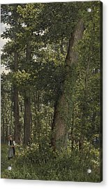 Oak Forest Acrylic Print by Celestial Images