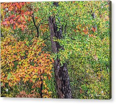 Oak Hickory Woodland Acrylic Print by Tim Fitzharris