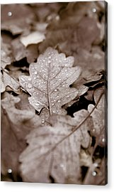 Oak Leaf Acrylic Print by Frank Tschakert