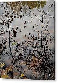 Oak Leaf Reflection At Spirit Springs Acrylic Print