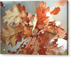 Oak Leaves In Autumn Acrylic Print