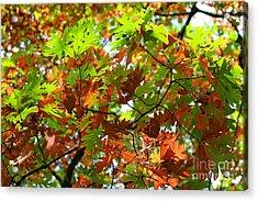 Oak Leaves Acrylic Print by Karen Adams