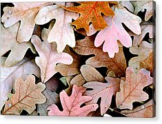 Oak Leaves Photo Acrylic Print by Peter J Sucy