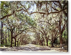 Oak Lined Road Acrylic Print by Joan McCool