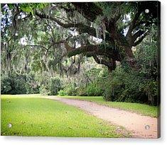 Oak Over The Trail Acrylic Print