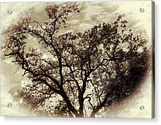 Acrylic Print featuring the photograph Oak Tree by Athala Carole Bruckner