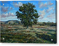Oak Tree In The Vale Of Pewsey Acrylic Print by Andrew Taylor