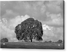 Oak Tree On Hill Acrylic Print