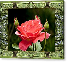 Oak Tree Rose Acrylic Print by Bell And Todd