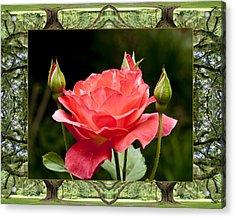 Oak Tree Rose Acrylic Print
