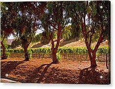 Oak Trees And Vines Acrylic Print