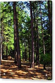 Oakrun Forest Acrylic Print by Joyce Dickens