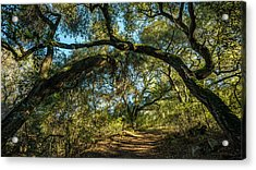 Acrylic Print featuring the photograph Oaks Arching Over Trail At Daley Ranch by Alexander Kunz