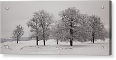 Oaks In Winter Acrylic Print by Gabriela Insuratelu