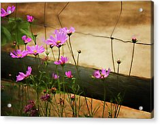 Oasis In The Desert Acrylic Print by Lana Trussell