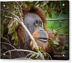 Obscurity Edition 4   Acrylic Print by Judy Kay