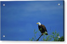 Observe And Report Acrylic Print
