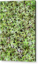 Oca Leaves Acrylic Print by Tim Gainey