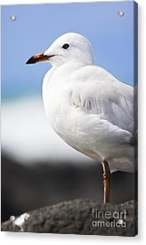 Ocean Bird Acrylic Print by Jorgo Photography - Wall Art Gallery