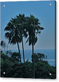 Ocean Brezze Palms Acrylic Print by Debra     Vatalaro
