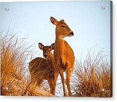 Ocean Deer Acrylic Print