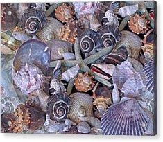 Ocean Gems 11 Acrylic Print by Lynda Lehmann